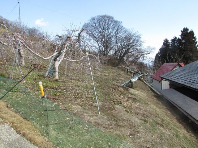 りんご畑(家の北側)