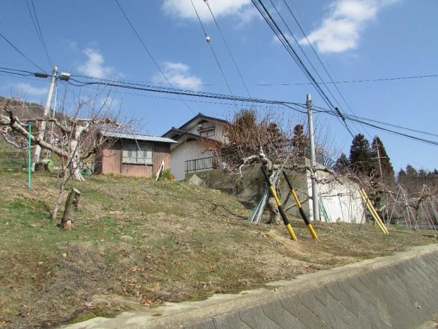 りんご畑(家の西側)