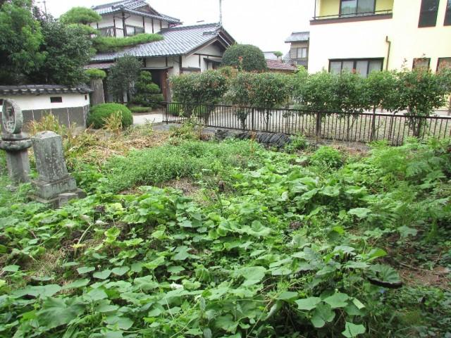 庭(母屋北西側)