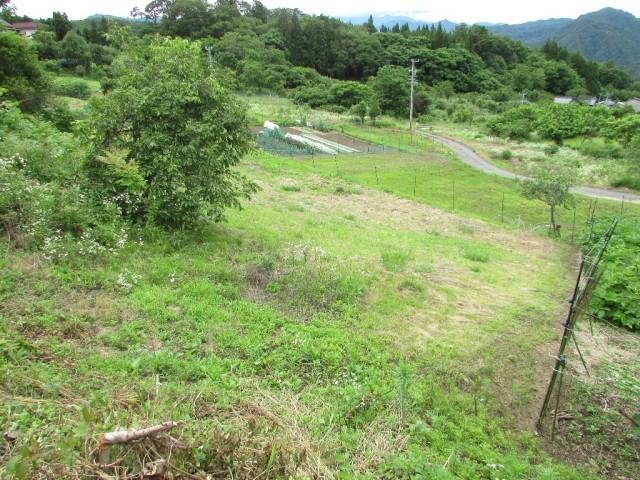 隣接の農地