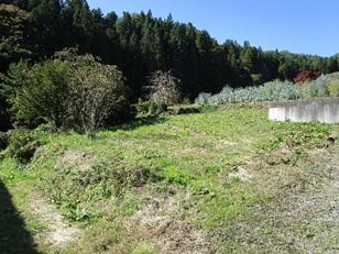 北側 農地